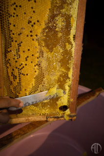 Organic Honey production in San Juan Del Sur