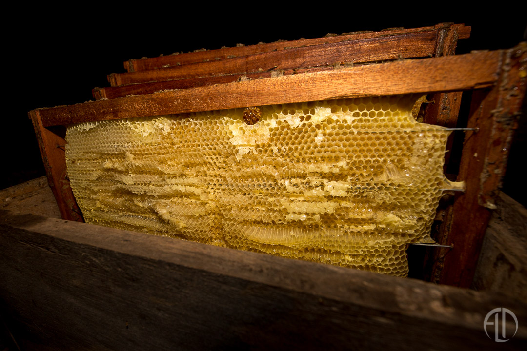Organic Honey harvesting in San Juan Del Sur
