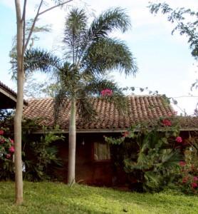 Organic nursery in San Juan Del Sur